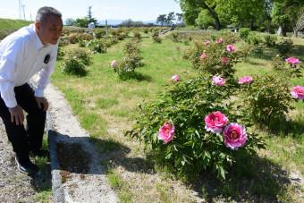「友好のボタンを多くの市民に楽しんでほしい」と花をめでる川村昇平さん