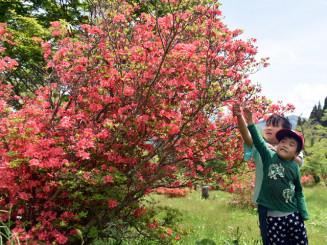 麓の蟻塚公園で赤く色づいたツツジを観察する子どもたち