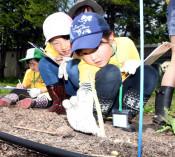 アスパラの秘密、興味津々 花巻で小学生が農業体験