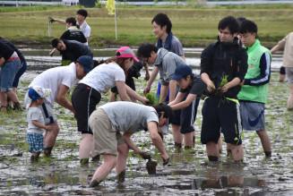 泥だらけになりながら手植えに励む参加者たち