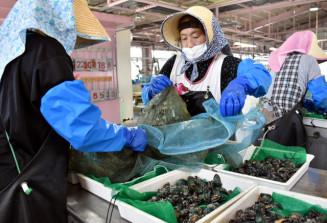 アワビの種苗の箱詰め作業をする従業員