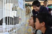 保護猫、大切に育てて 盛岡のNPO譲渡会