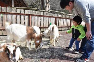 盛岡市動物公園の春開演