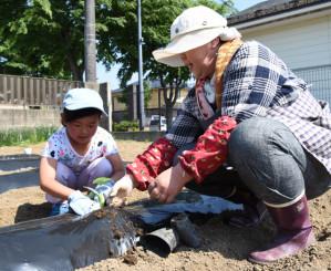 協力して野菜の苗を植える参加者