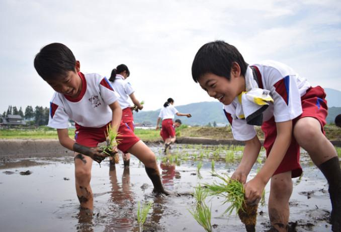 元気よく田植えに挑戦する青笹小児童