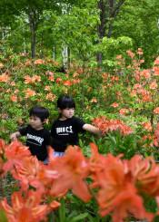 ツツジが見頃を迎えた久慈平庭県立自然公園を散策する子どもら