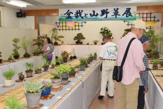 会員が丹精込めて育てた作品が並ぶ盆栽と山野草展