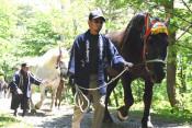 参拝馬が迫力登坂 洋野・久慈平岳山開き