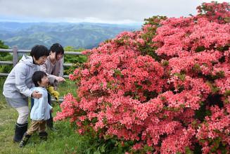 山頂付近で鮮やかに色づくツツジを眺める家族連れ