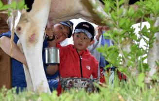 牛の搾乳体験を行う男の子