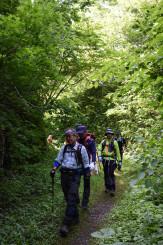 新緑に囲まれた道を進む登山者ら