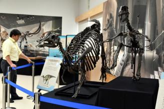 恐竜の全身骨格など約80点の史料が一堂に並ぶ「生命のれきし」展
