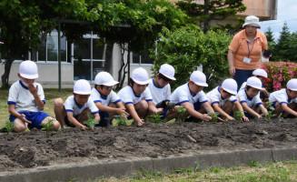 丁寧に花の苗を植える子どもたち