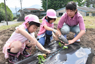 サツマイモの苗を植えて交流を深める大船渡東高の生徒と立根保育園の園児