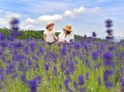 笑顔囲む爽やか紫 きょう夏至・雫石のラベンダー畑が見頃