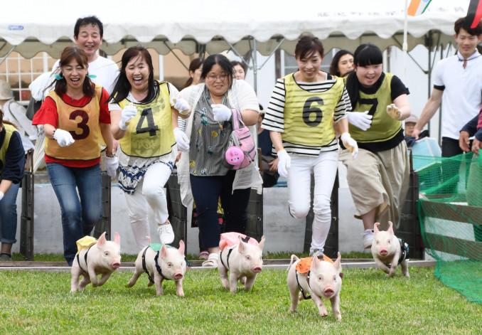 とんとんダービーで子豚を追う「ジョッキー」たち