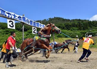 多くの観客の声援を背に、引き手と一体となってゴールを目指して駆け出す馬=23日、遠野市宮守町