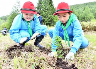 アカエゾマツの苗木を植樹する川井小の児童
