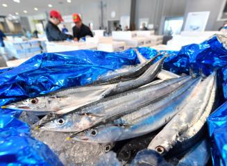 大船渡魚市場に水揚げされた公海サンマ=26日、大船渡市大船渡町