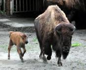 28年ぶり、見なきゃ〝ソン〟 盛岡市動物公園