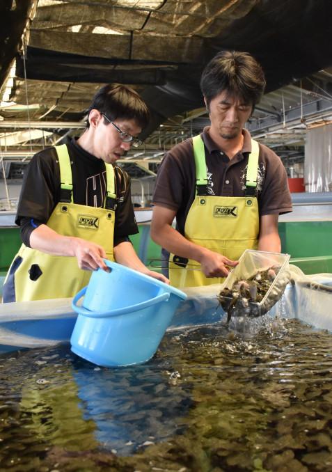 ヒラメの種苗の出荷作業をする職員ら