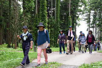 緑や湧水群を楽しみながら歩く参加者