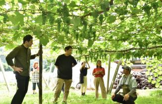 あかざわせがれ倶楽部のブドウ園を視察する江森宏之シェフ(左)と松本一平シェフ(中央)