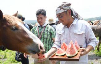 馬にチャグチャグスイカを与える生産者たち
