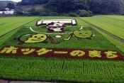 たまなぼうや、稲で鮮やか 浮島と一方井で田んぼアート見頃