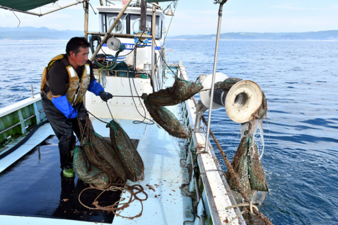 採苗器を海から引き上げる漁業者