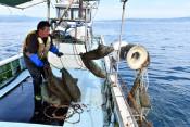 揺れる船、力仕事に汗 野田・荒海ホタテ養殖作業体験ルポ
