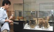 古代の生活示す出土品 「蝦夷」のテーマ展、土器や石器を紹介