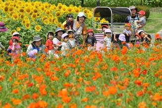 見ごろを迎えたキバナコスモスとヒマワリ。夏と秋の花が共演した=21日、雫石町西安庭・御所湖広域公園