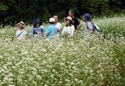 ソバ畑散策、交流楽しむ 葛巻・江刈川地区で花見会