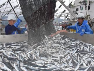 本格操業後、本州で今季初水揚げされたサンマ=27日午前7時12分、大船渡市大船渡町の市魚市場