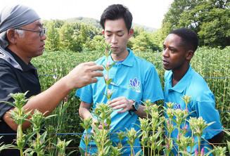 生産者の種市新一さん(左)の圃場でリンドウの生産方法や出荷の規格などについて説明を受けるアンジェロ・マテカさん(右)と原田俊吾社長