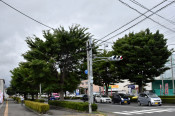 ムクドリ対策、街路樹剪定が有効か 盛岡・津志田で姿消す