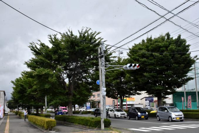 盆前までムクドリが集まっていたとされる盛岡市津志田の街路樹