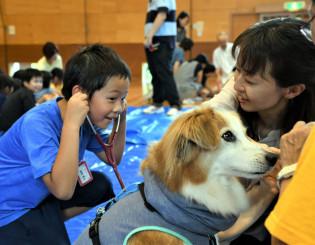 聴診器で犬の心臓の鼓動を聞く児童