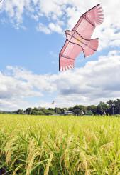 収穫間際の米を見守るように、秋空を飛ぶ鳥よけのたこ=12日、滝沢市大崎