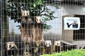並んで待つかわいい姿 話題 盛岡市動物公園のニホンアナグマ