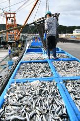 久慈港に水揚げされた約132トンのマイワシ