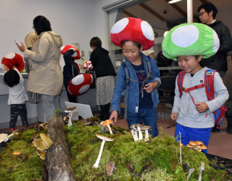 実物のキノコを使った模型も展示されたイワテきのこ大祭