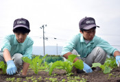 農業甲子園ダブル出場 遠野緑峰高・ホップ和紙、琴畑カブ研究班