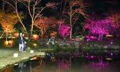 夜の紅葉、光と共演 奥州えさし藤原の郷・園内ライトアップ