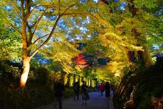 ライトアップされ、木々が幻想的に浮かび上がる中尊寺の参道