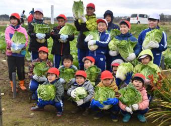 収穫した白菜を大事そうに抱える児童