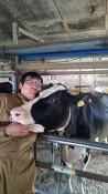 「孫娘牛も搾乳したい」と繁殖に挑戦し、成功!