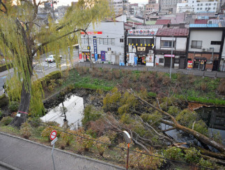 台風19号で鶴ケ池に倒れたシダレヤナギの大木と「銀座の柳三世」。池南端の1本(写真左)も伐採される=27日、盛岡市内丸