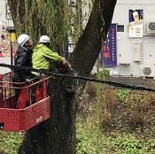 シダレヤナギ撤去始まる 盛岡・鶴ケ池、台風で倒木の2本
